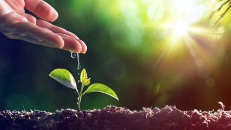 Marketing Automation : qu'est-ce que le lead nurturing ?