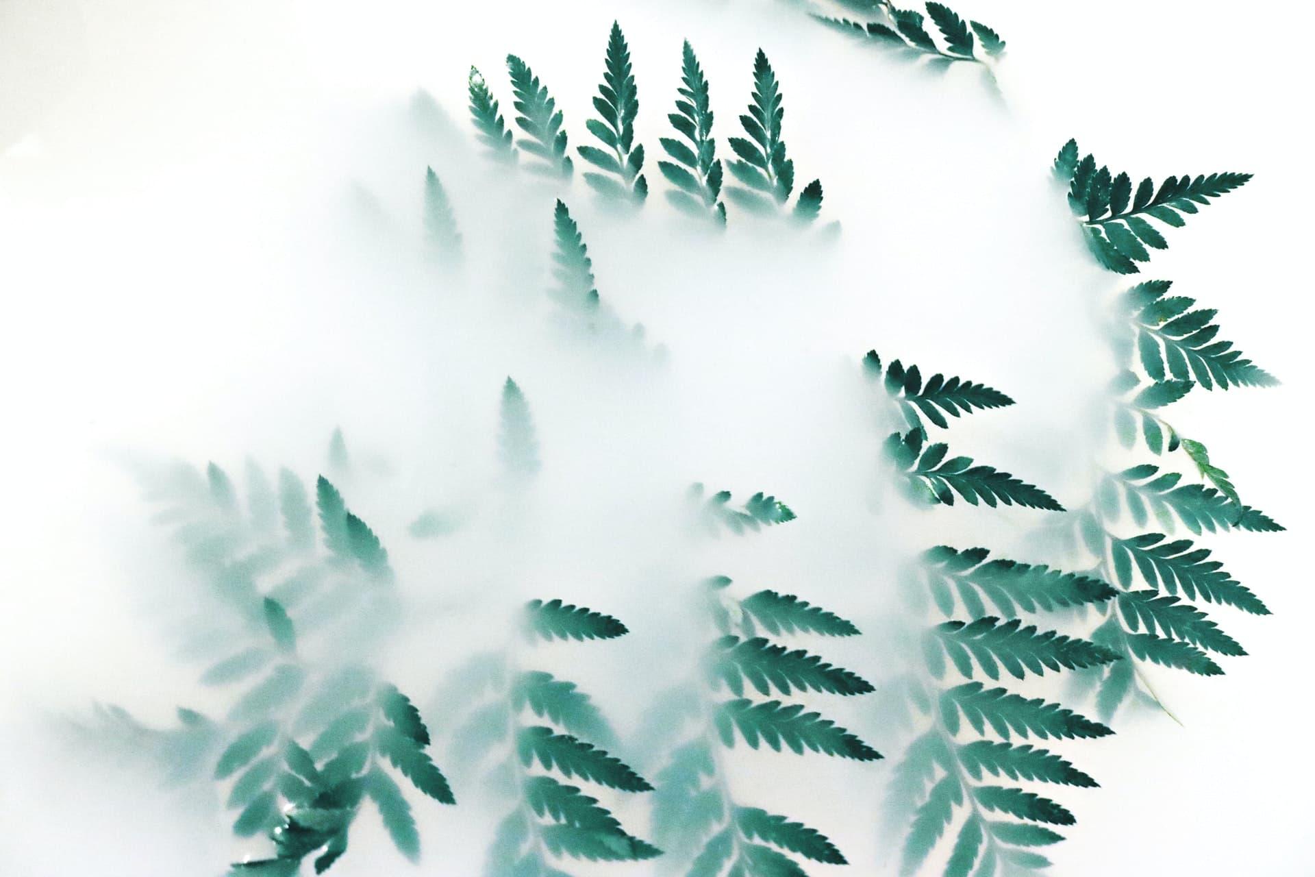 eco-conception de site web